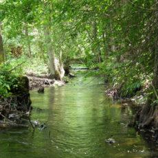 Mostek-na-rzece-Kosna-w-poblizu-mlyna-Patryki