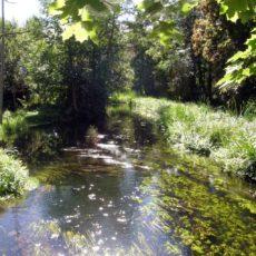 Rzeka Kośna - rozlewisko