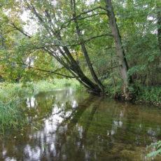Rzeka Kośna - nasze ulubione drzewo