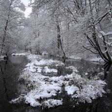Rzeka Kośna - nasze ulubione drzewo zima
