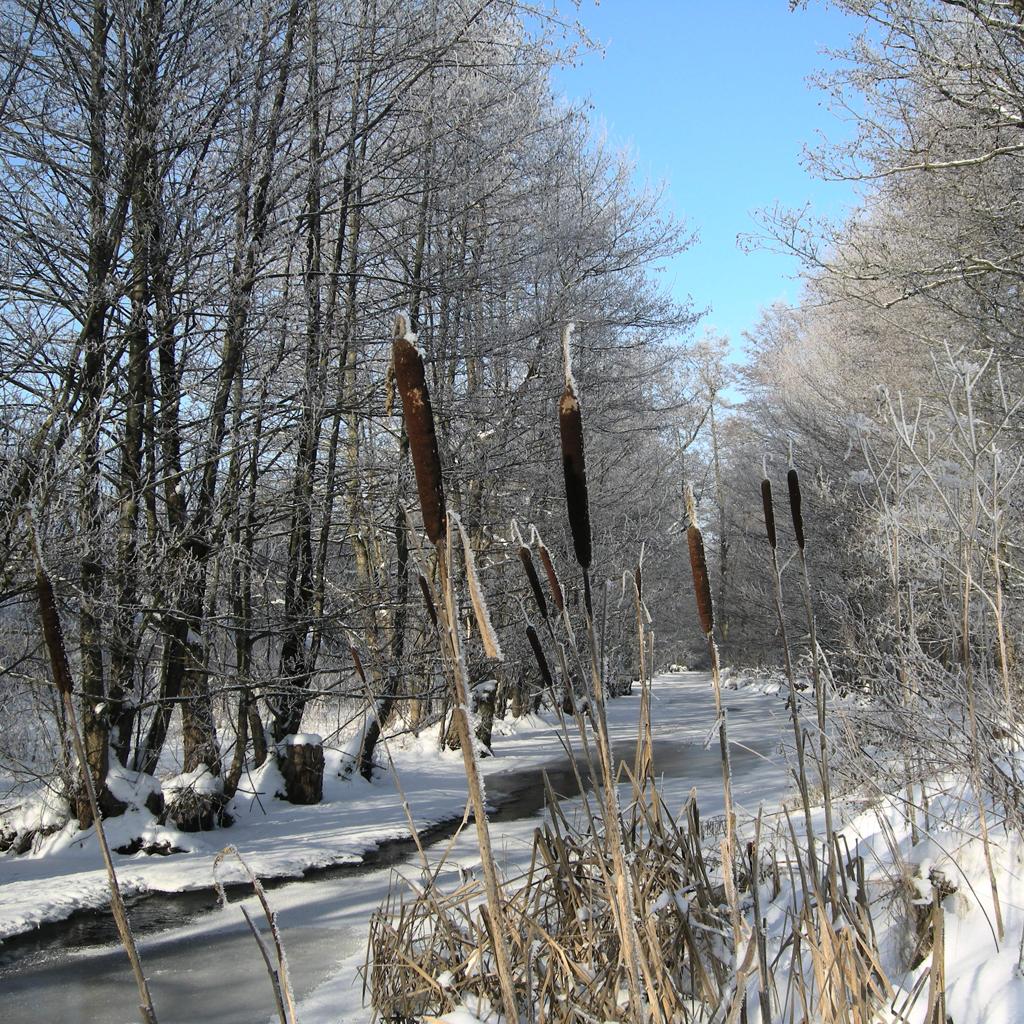 zima-2013-patykiDSCN0260